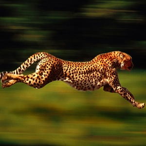 The gallery for --> Moving Pictures Of Animals